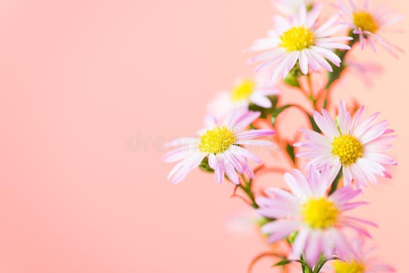 Schöner Blumenhintergrund lizenzfreies stockfoto