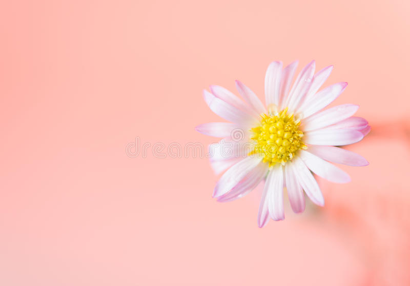 Schöner Blumenhintergrund lizenzfreie stockfotografie