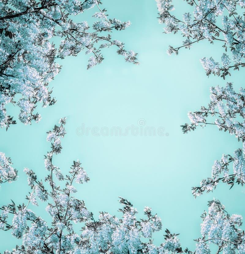 Schöner Blumenhintergrund mit blauer Blüte auf hellem Türkis, Rahmen lizenzfreie stockbilder