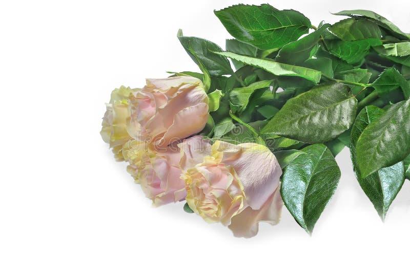 Schöner Blumenstrauß von empfindlichem blassem - rosa Rosen lokalisiert auf Weiß stockfoto