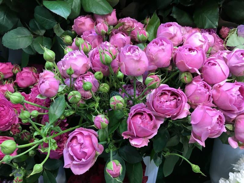 Schöner Blumenstrauß von purpurroten Rosen stockfoto
