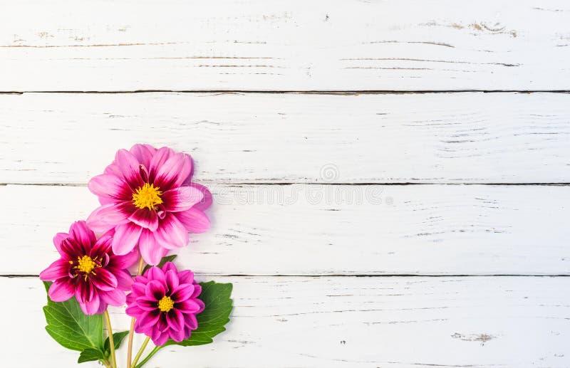 Schöner Blumenstrauß von rosa Dahlienblumen lizenzfreie stockbilder