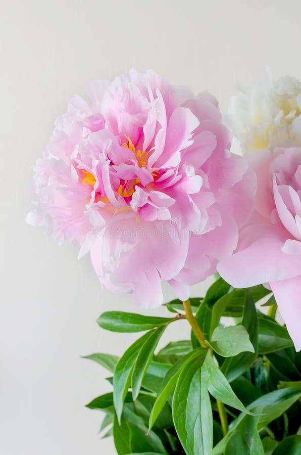 Schöner Blumenstrauß von rosa und weißen Pfingstrosen lizenzfreies stockbild