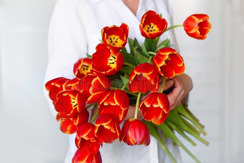 Schöner Blumenstrauß von roten Tulpen in den Händen eines Mädchens lizenzfreies stockbild