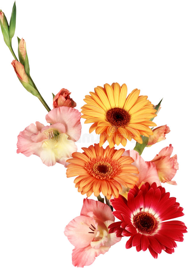 Schöner Blumenstrauß Von Weißen Und Roten Blumen Auf Einem Weißen ...