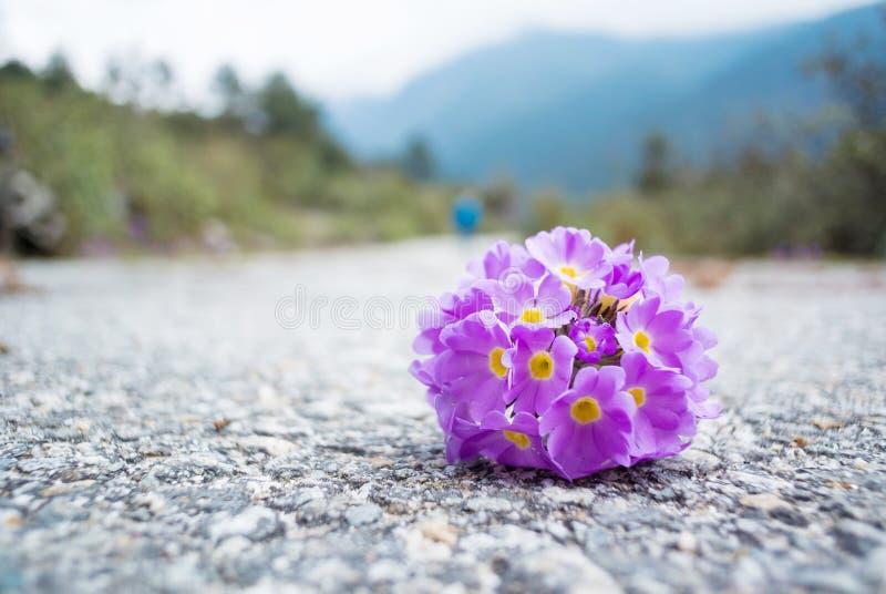Schöner Blumentropfen auf Straße lizenzfreies stockbild
