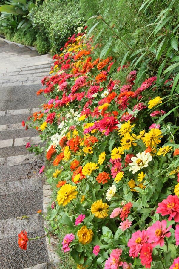 Schöner bunter Blumengarten lizenzfreies stockfoto