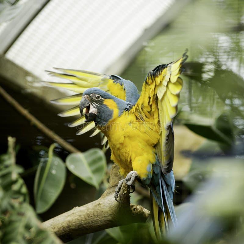 Schöner bunter Papagei über tropischem Hintergrund lizenzfreie stockfotos