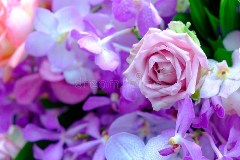 Schöner bunter Rosen- und Blumenhintergrund lizenzfreie stockfotos