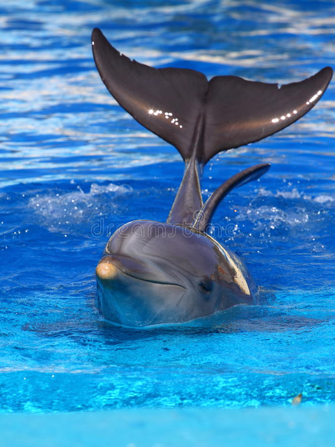 Schöner Delphin stockfotografie