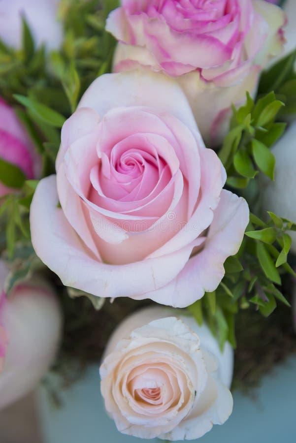 Schöner Eimer rosa Rosen stockfotos