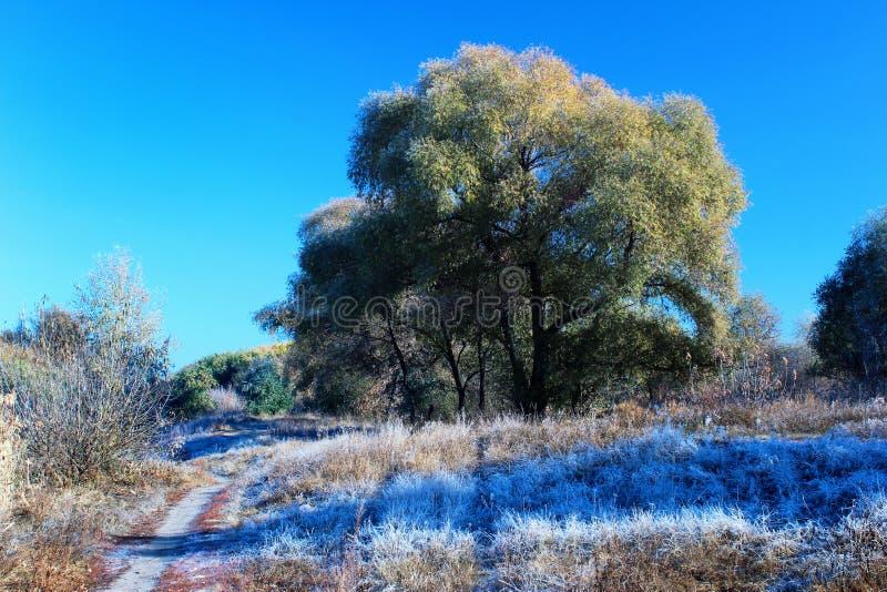 Schöner eisiger Morgen mit Raureif auf Gras in den Baumschatten stockfotografie