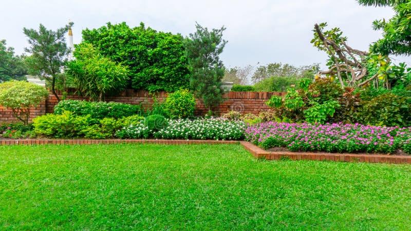 Schöner englischer Häuschengarten, bunte blühende Pflanze auf glattem Rasen des grünen Grases und Gruppe immergrüne Bäume lizenzfreies stockbild