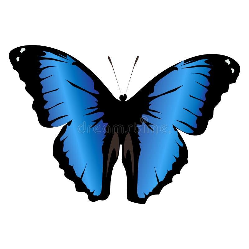 Schöner farbiger blauer Schmetterling der Ikone auf einem weißen Hintergrund Vec lizenzfreie abbildung