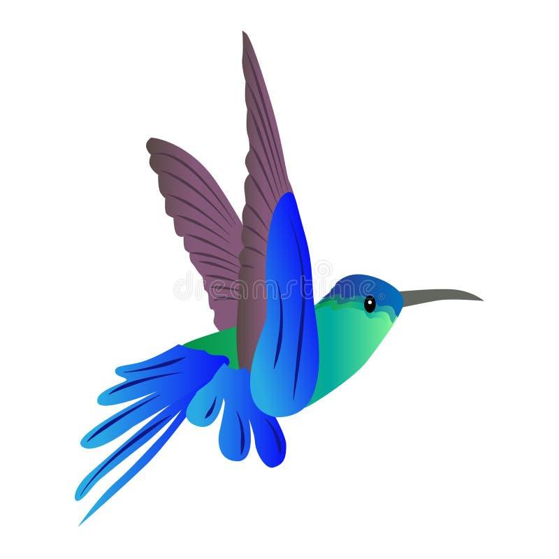 Schöner farbiger Ikonenfliegenvogel Kolibri auf einem weißen backgr lizenzfreie abbildung