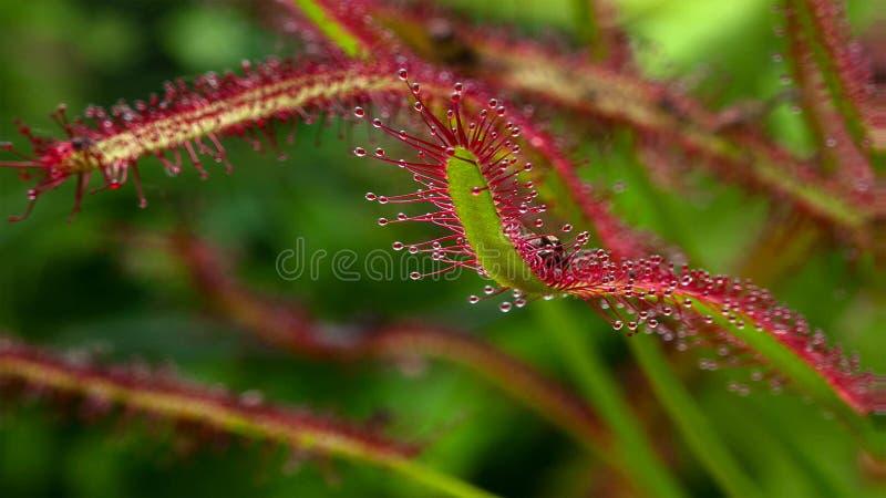 Schöner Farn verlässt Laub Natürlicher Blumenfarnhintergrund stockbilder