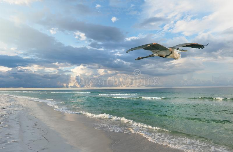 Schöner Florida-Strand bei Sonnenaufgang als aGreat blauem Reiher fliegt vorbei lizenzfreie stockfotografie