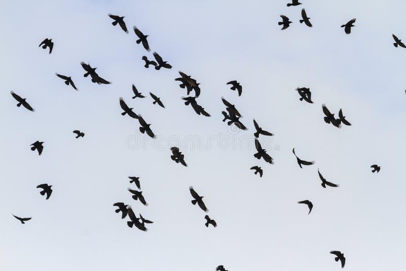 Schöner Flug von Türmen über dem Himmel stockfotografie