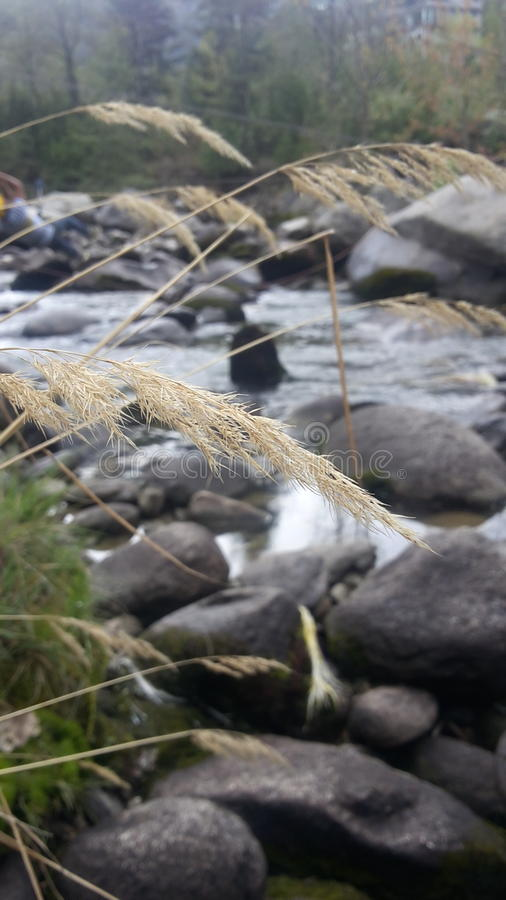 Schöner Fluss stockfotos