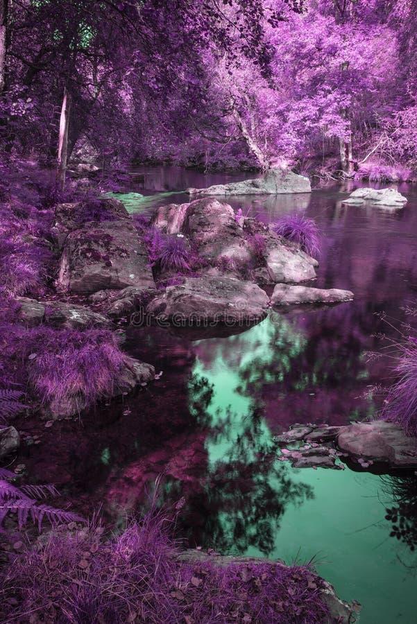 Schöner Fluss, der abwechselnden surrealen farbigen Wald durchfließt stockbilder