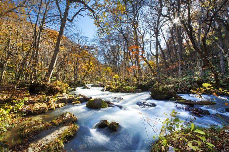 Schöner Fluss Oirase-Schlucht, der die Herbstsaison, Japan druing ist lizenzfreies stockbild