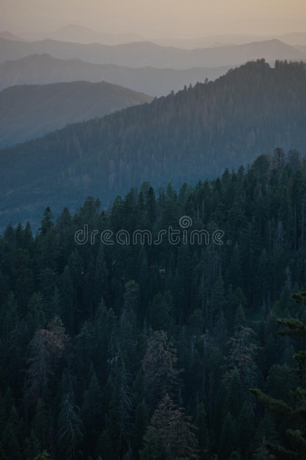 Schöner Forest Mountain Ranges lizenzfreie stockfotos
