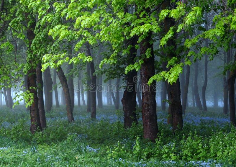 Schöner Frühlingsmorgen, blaue Blumen, erstaunliches Licht stockfoto