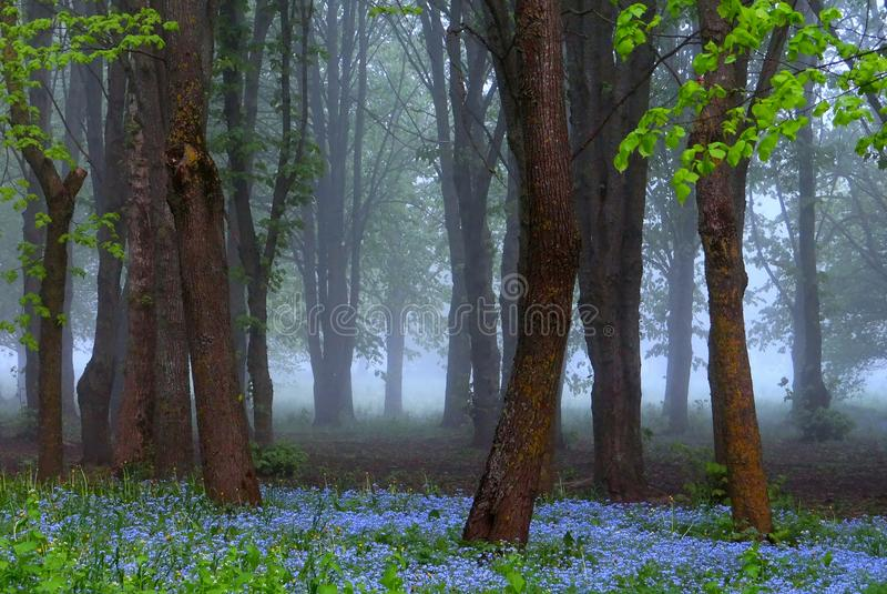 Schöner Frühlingsmorgen, blaue Blumen, erstaunliches Licht stockfotografie