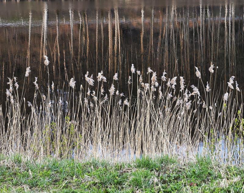 Schöner Frühlingsmorgen nahe Asveja See lizenzfreies stockfoto