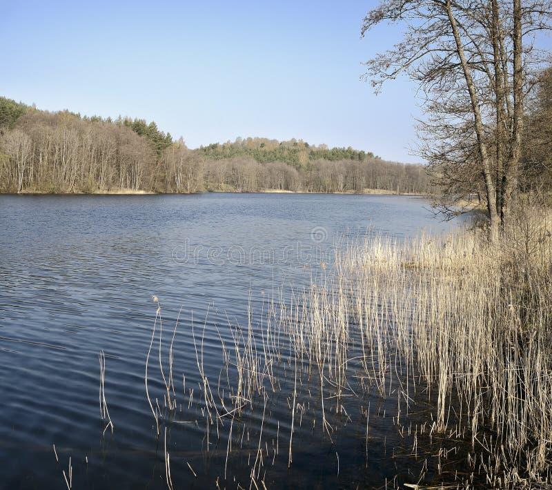 Schöner Frühlingsmorgen nahe Asveja See lizenzfreie stockbilder