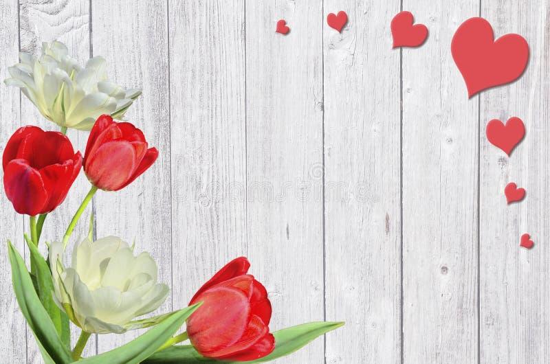 Schöner Frühlingsrahmen mit den roten und gelb-weißen Tulpen und den Herzen auf weißem hölzernem Hintergrund lizenzfreies stockfoto