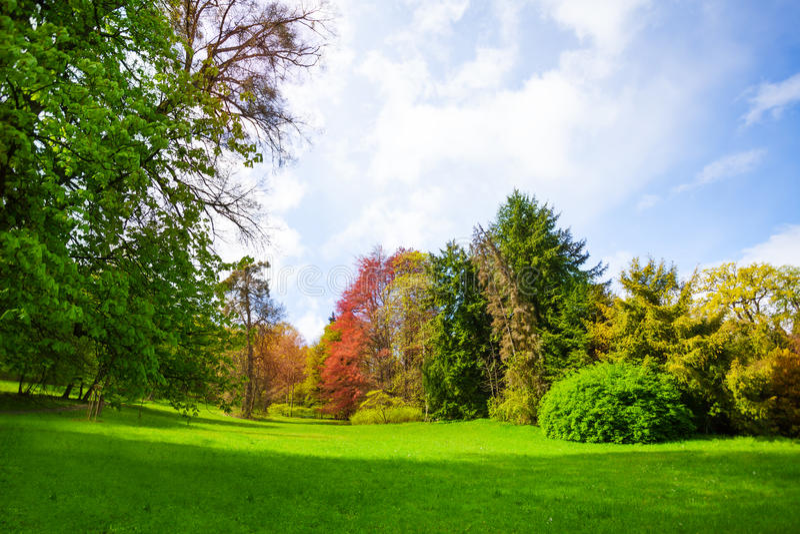 Schöner Frühlingswald mit Bäumen aller Farben lizenzfreies stockbild