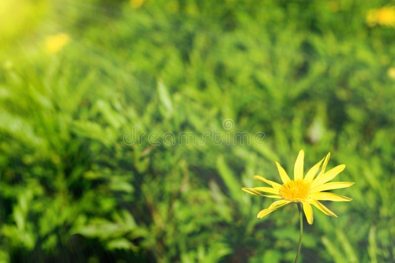 Schöner Garten beleuchtet durch Sonnenschein stockbild