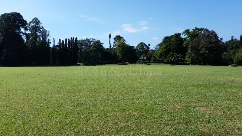 Schöner Garten in Sri Lanka lizenzfreie stockfotos