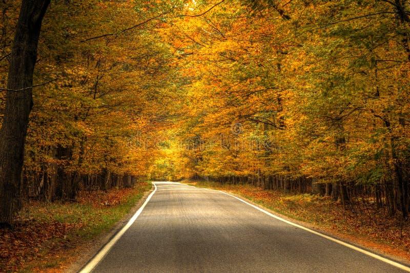 Schöner Gehweg herein mit Fallfarben in Michigan USA lizenzfreie stockbilder