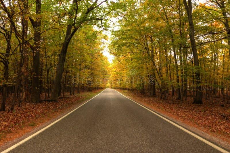 Schöner Gehweg herein mit Fallfarben in Michigan USA lizenzfreies stockbild