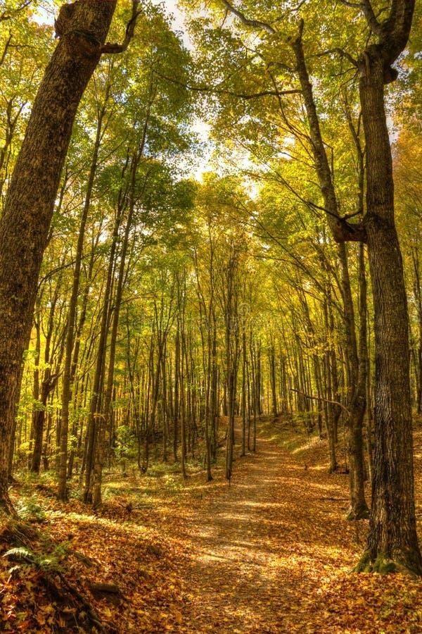 Schöner Gehweg herein mit Fallfarben in Michigan USA stockfoto