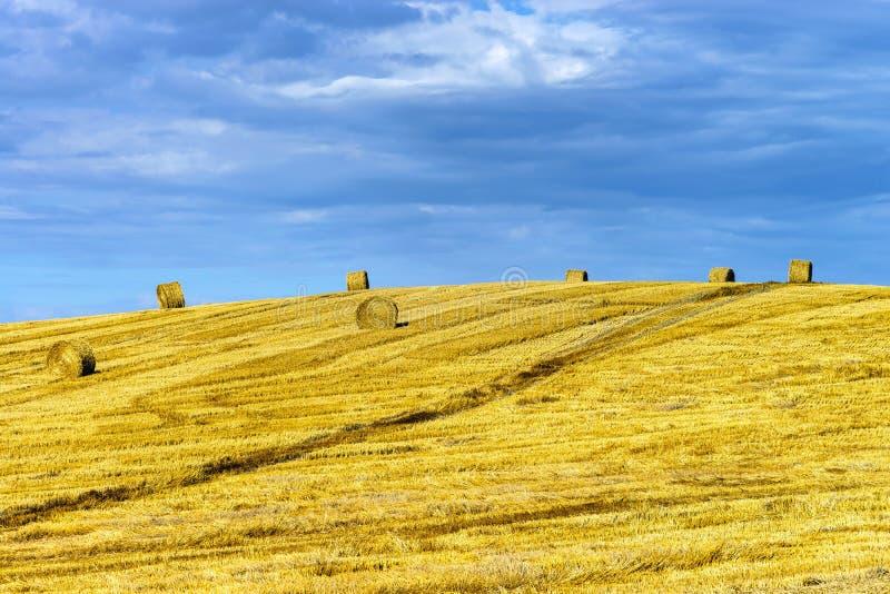 Schöner gelber Hügel mit Heuschobern bei Sonnenuntergang stockfotos