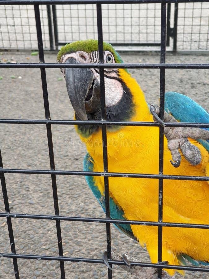 Schöner gelber und blauer Papagei stockbilder