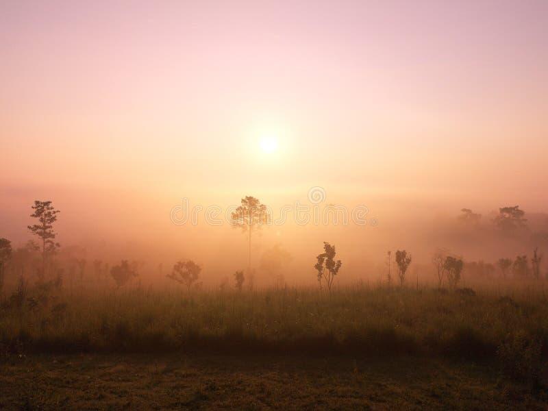 Schöner glühender warmer Sonnenaufgang der grünen Hügel des Panoramas, bunter warmer oben genannter Berg des drastischen Glanzsch lizenzfreie stockfotografie