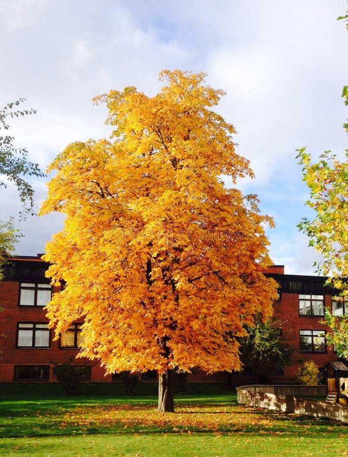 Schöner goldener Baum stockbild