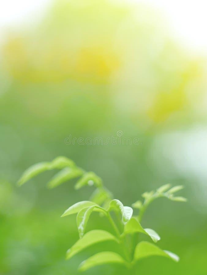 Schöner grüner Blatthintergrund und abstrack Beschaffenheit für Tapete und ruhiges stockbilder