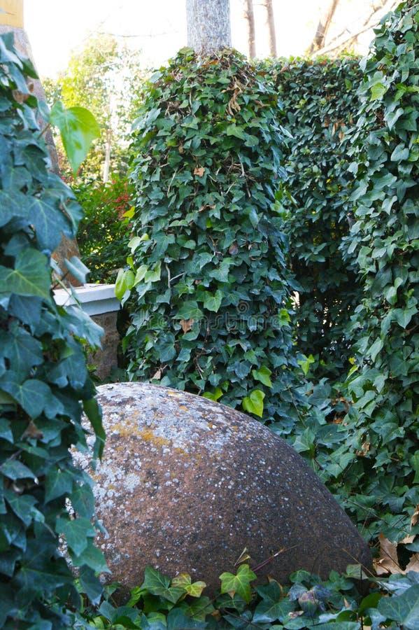 Schöner grüner Efeu belaubt unter Bäumen mit Schlammglas unter ihm 6 stockfotos