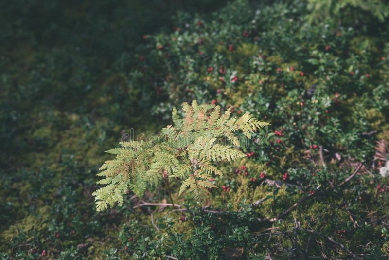schöner grüner Farn verlässt unter Sonnenlicht im Wald - vintag lizenzfreies stockbild