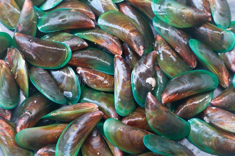 Schöner grüner Miesmuschelbeschaffenheitshintergrund stockfoto