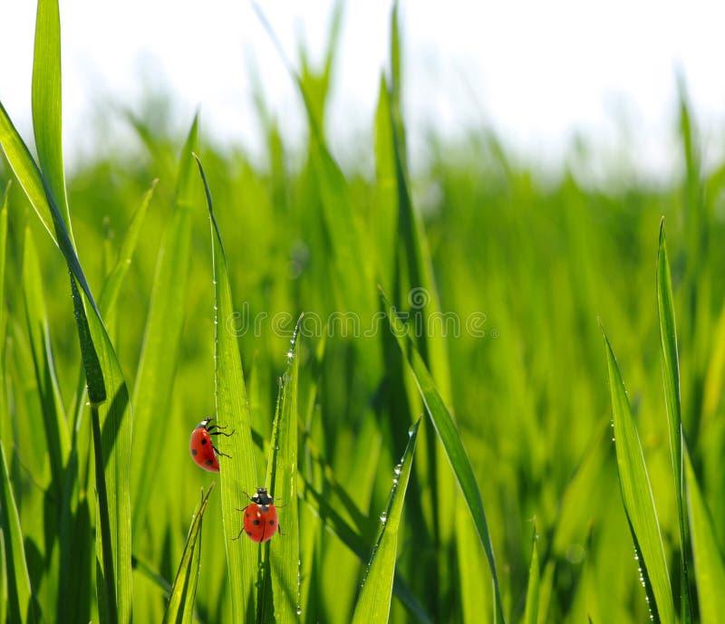 Schöner grüner Rasen lizenzfreie stockbilder