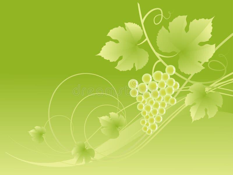 Schöner grüner Traubenrebehintergrund. lizenzfreie abbildung