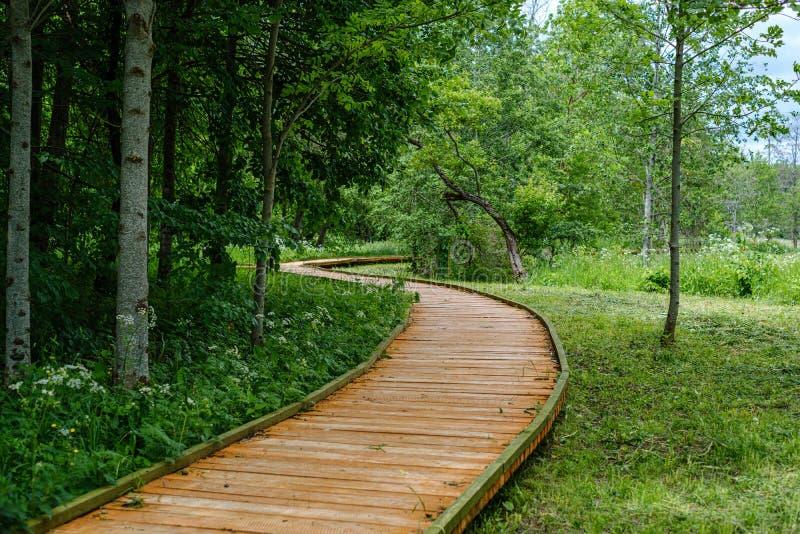 schöner hölzerner Plankenbahngehweg in der grünen Weide lizenzfreies stockfoto