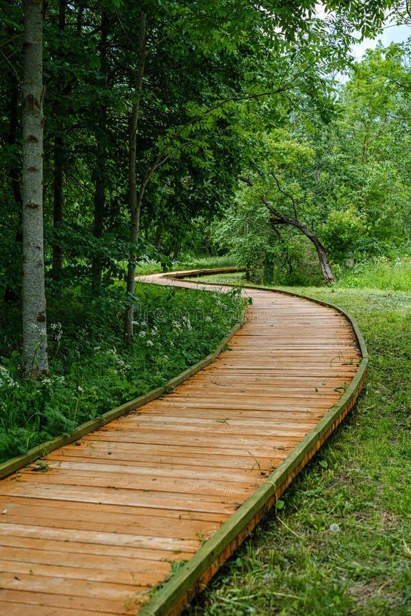 schöner hölzerner Plankenbahngehweg in der grünen Weide stockbilder