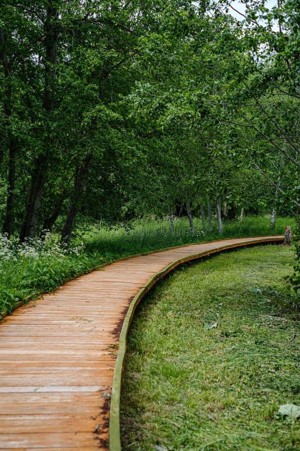 schöner hölzerner Plankenbahngehweg in der grünen Weide stockfoto
